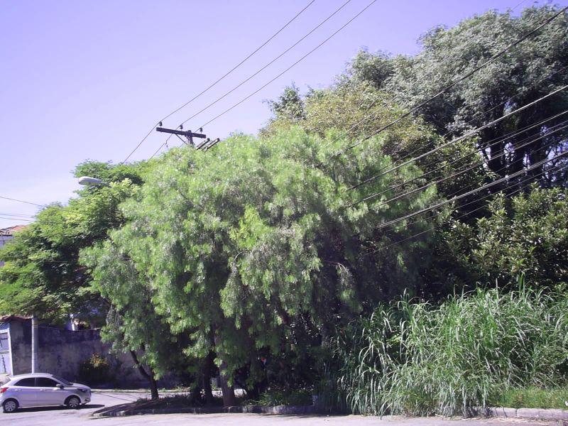 Casa Padrão aluguel JARDIM LUCIA São Paulo