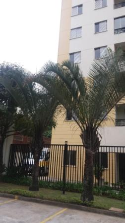 Apartamento venda Butantã - Referência 1593-V